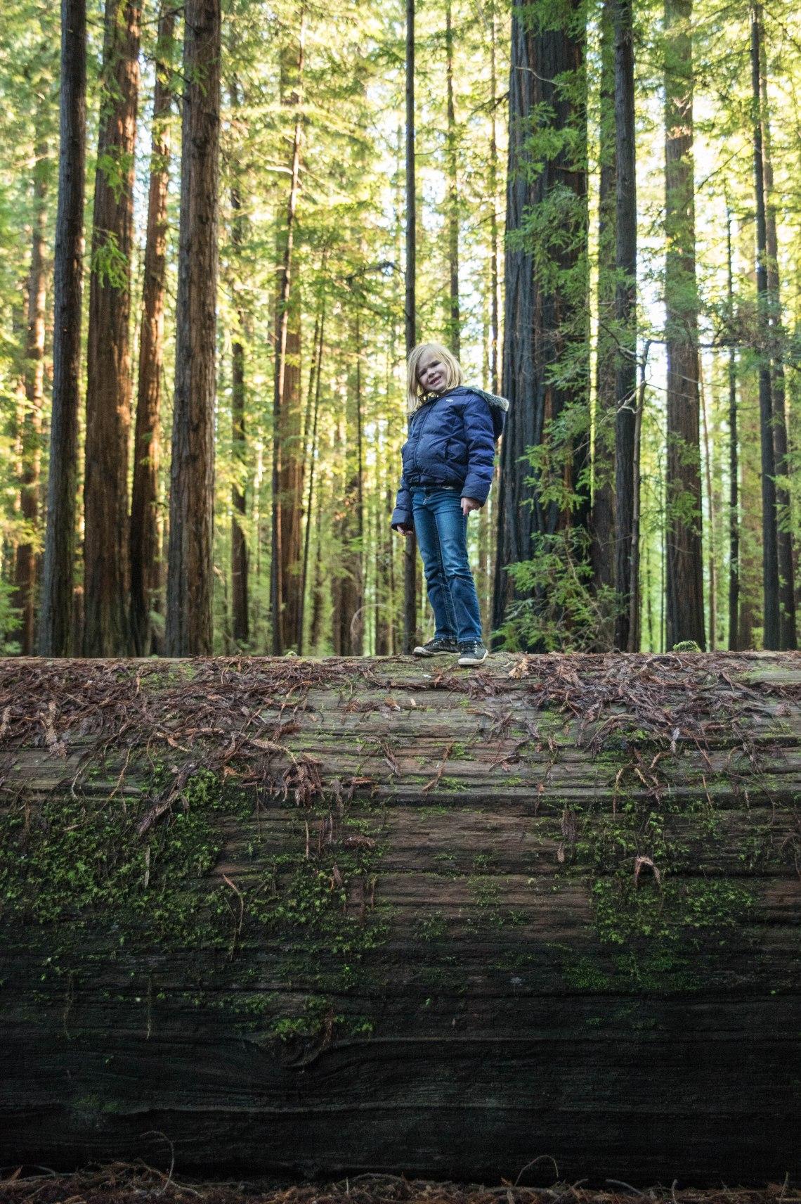 redwood faves-11