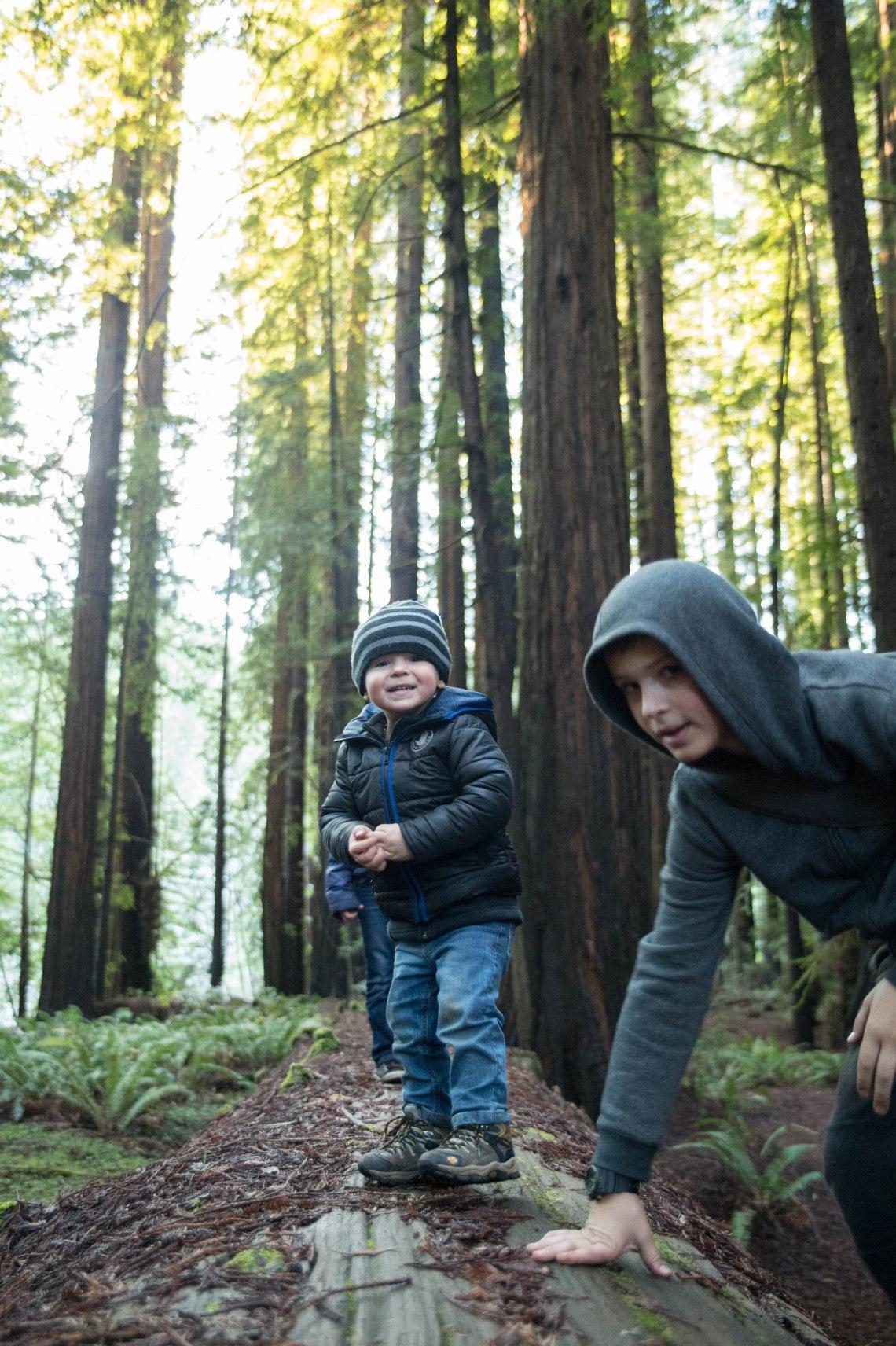 redwood faves-13