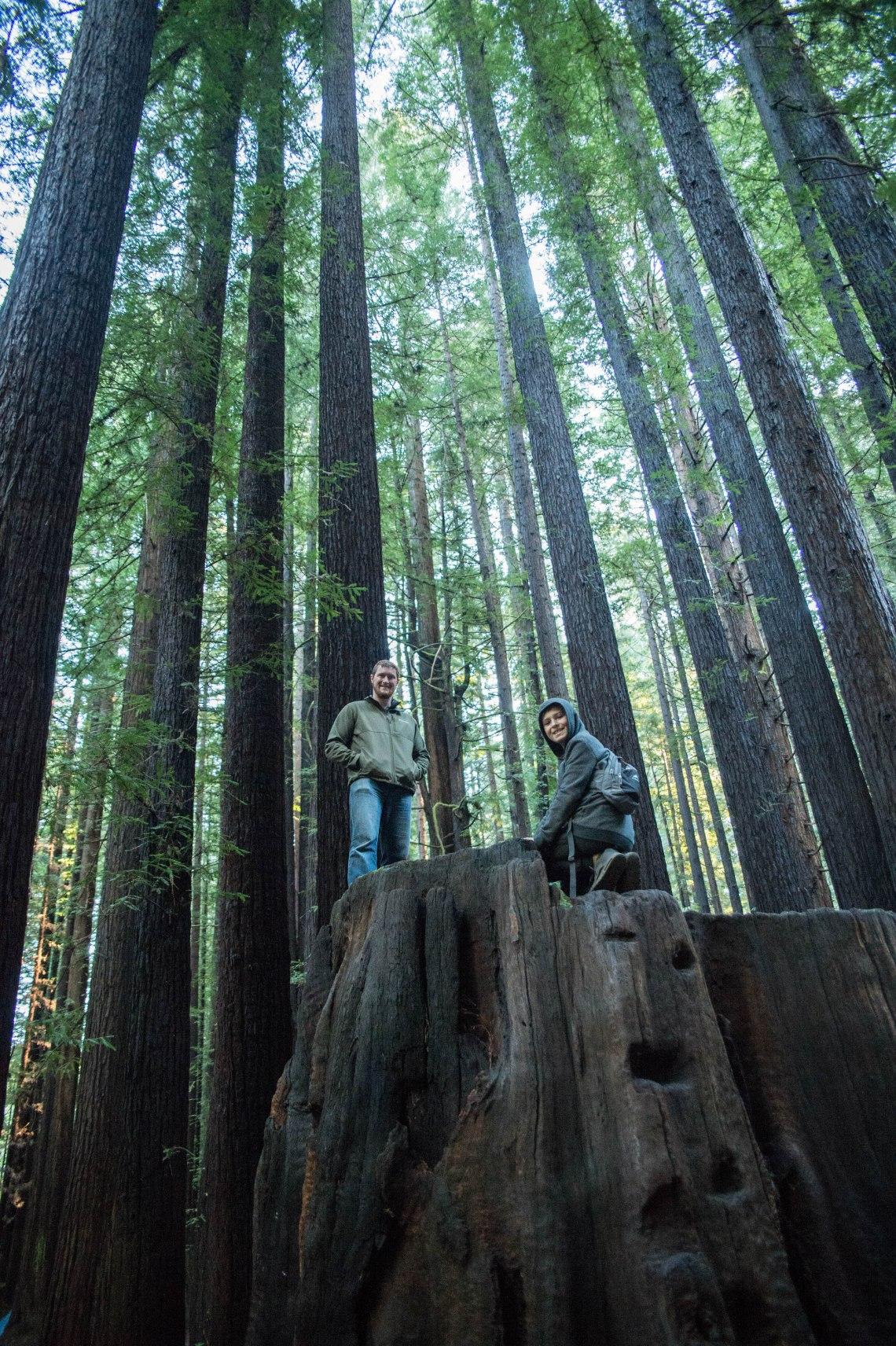 redwood faves-6