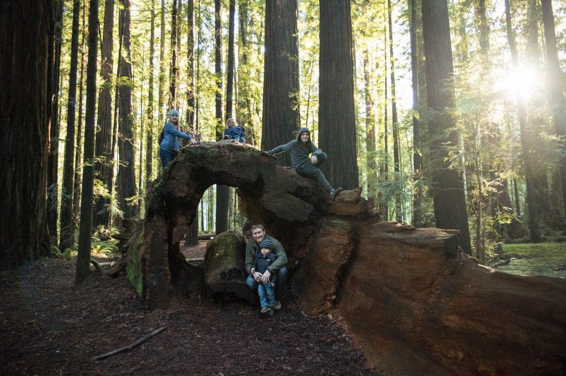 redwood faves-7