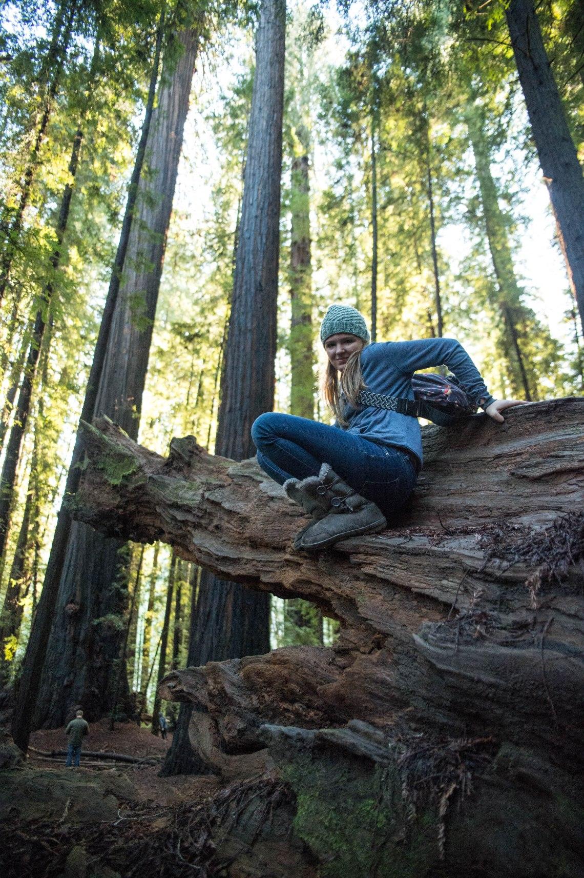 redwood faves-8