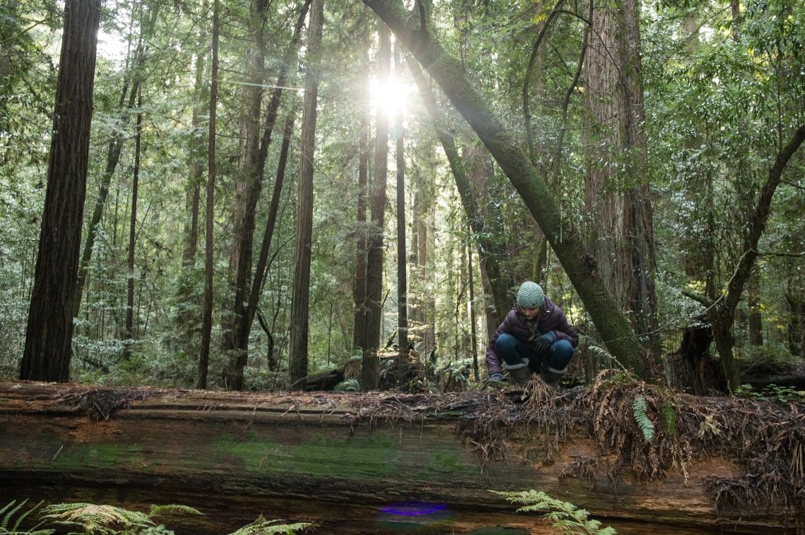redwoods-10