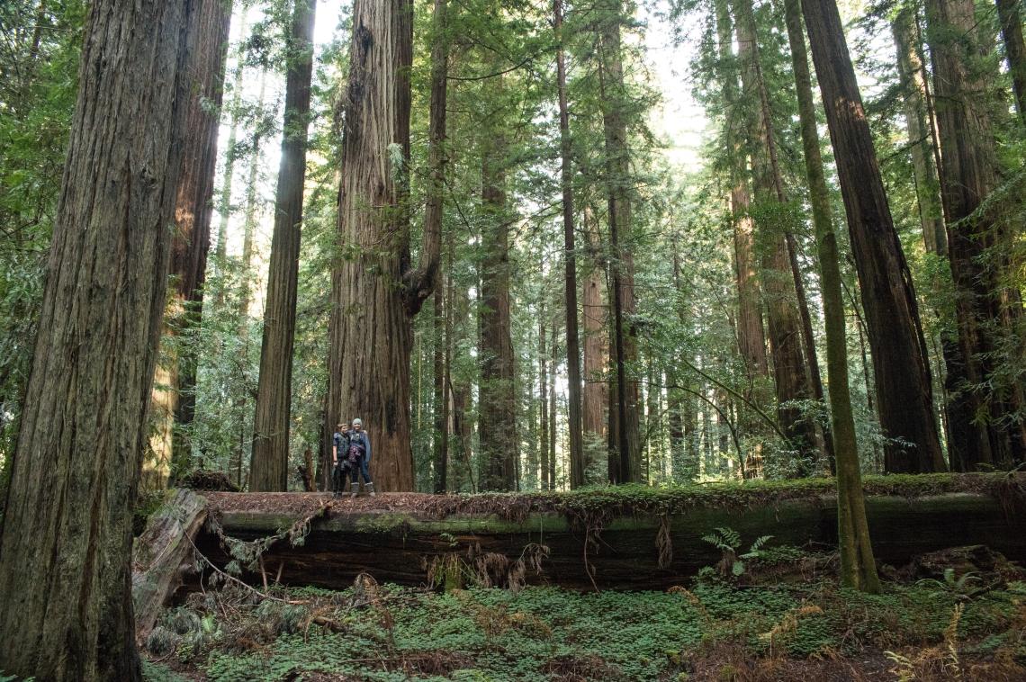 redwoods-14